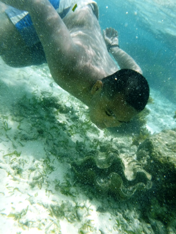 An encounter with a giant clam