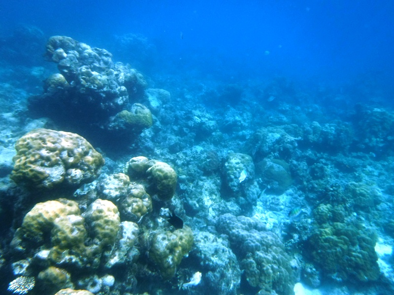The coral area