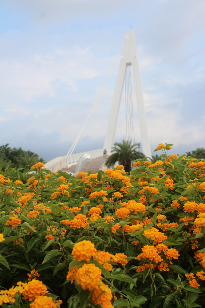 017 Pretty flowers as foreground to the Lovers' Bridge