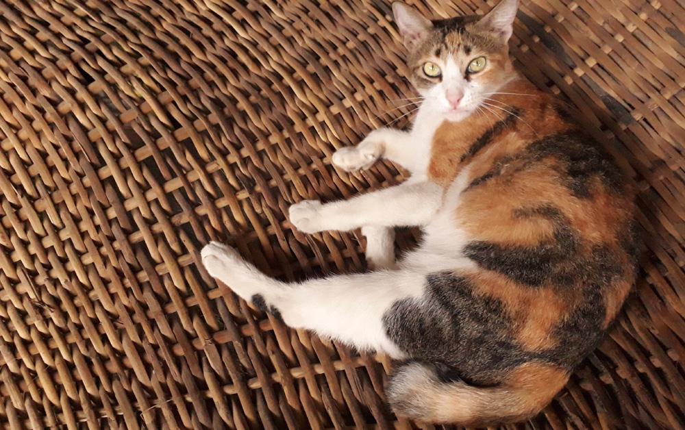 Miso enjoying the hammock